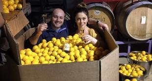 Napa Valley Distillery Meyer lemons