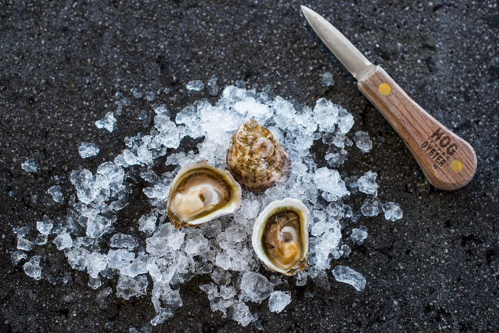 Hog Island Olympia oysters